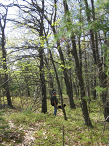 Appalachian Oak Pine Forests Unh Extension