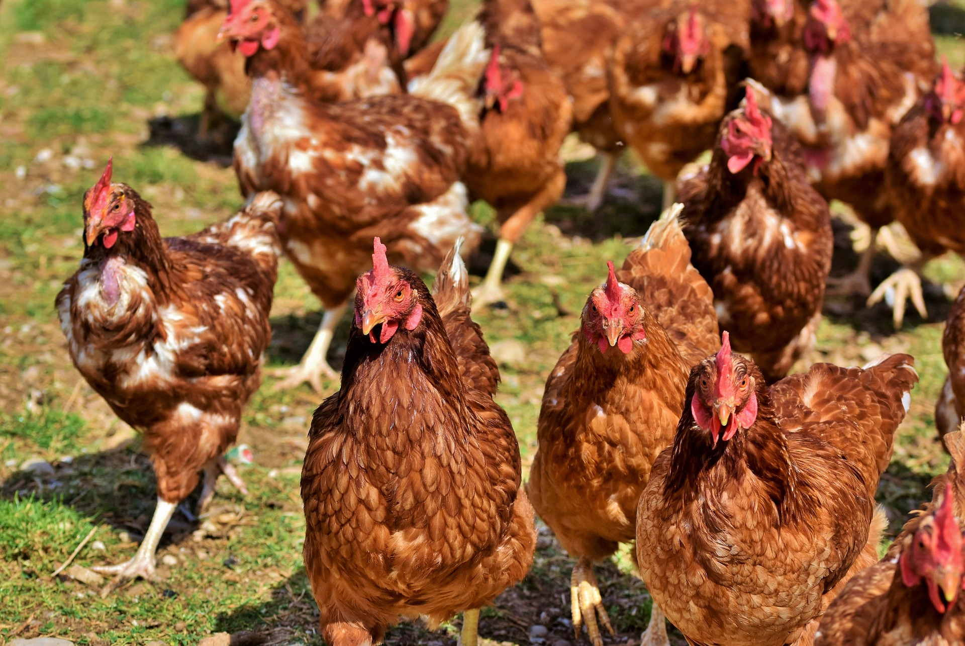 Food Safety for Poultry & Rabbit Producers: Initial Class