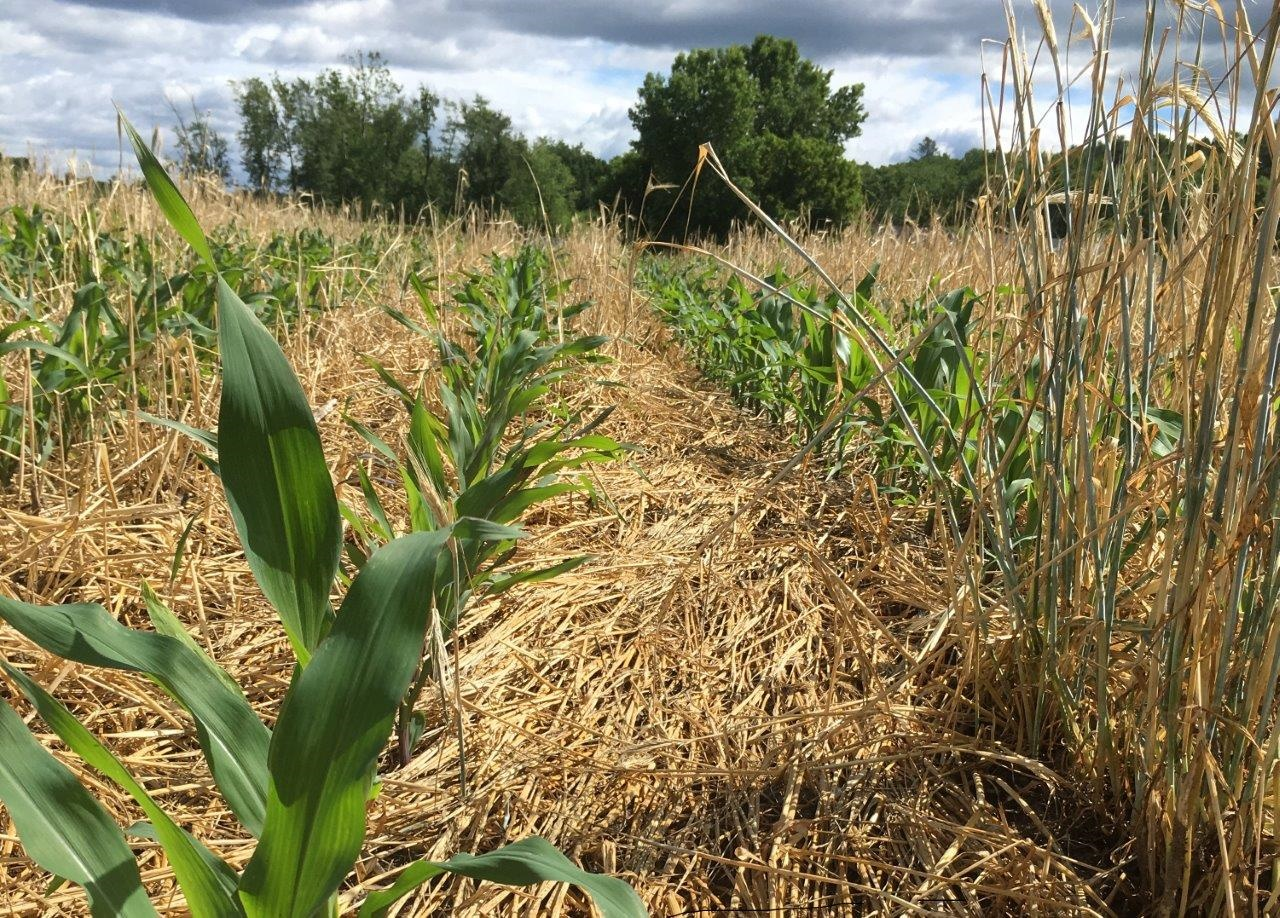 No-Till and Cover Crop Field Meeting