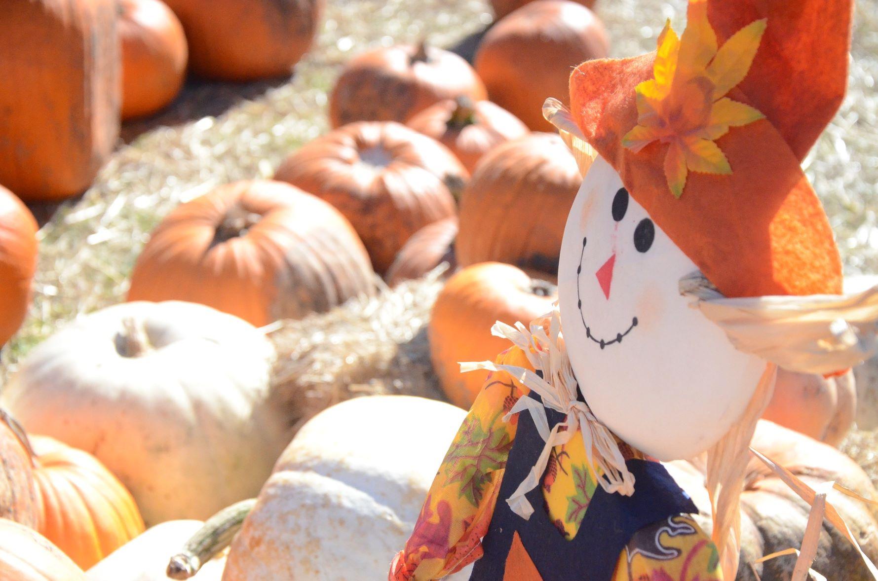 Belknap County 4-H Fall Festival
